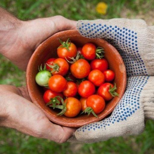 BezGranic Travel - Instagram - Włochy - pomidory